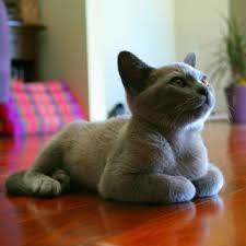 cute cat pet s floor hd wallpaper
