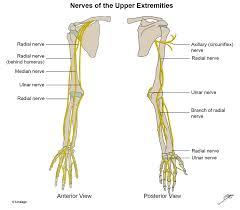 Upper Extremity Nerves Msk Medbullets Step 1