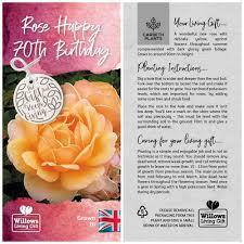 rose bush happy 70th birthday gift