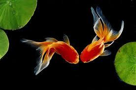 Live Fish Wallpaper - 1400x928 ...