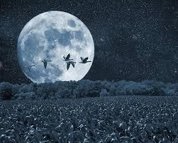 night moon birds scenery trees artistic art print