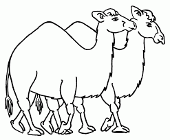 Small Picture Dromedary Camel Coloring Page Contegricom