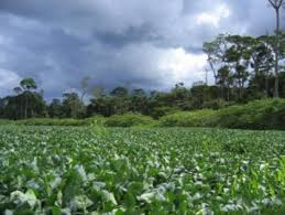 the state government hopes to reduce greenhouse gas emissions by regulating deforestation