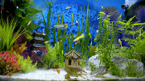 Oriental Fish Tank Wallpaper In Full Hd Resolution