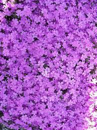 aesthetic purple flower backgrounds ...