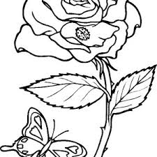 Small Picture Awesome Rose Picture Coloring Page Awesome Rose Picture Coloring