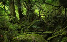 wallpapers hd forest. Interesting Forest Forest Wallpapers  Full HD Wallpaper Search Intended Hd