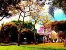 imagem de Jaboticaba Rio Grande do Sul n-14