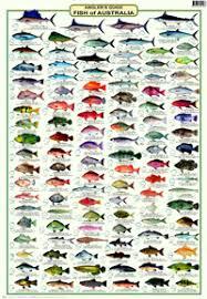 Anglers Guide Fish Of Australia Fish Chart Fish Sea Fish