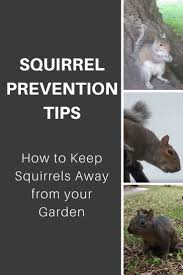 squirrel prevention tips how to keep squirrels away from your garden
