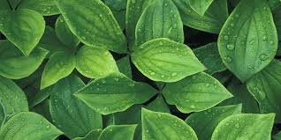 Leaf Color Chart For Sale Things Your Plant Leaves Are Trying To Tell You Plant Leaf