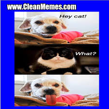 Funny Clean Memes - Beautiful Images and Pictures via Relatably.com