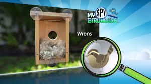 See Thru Tv Wondrous See Through Bird Feeder 138 See Thru Bird Feeder As Seen