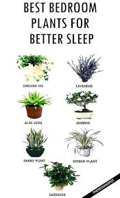 small office plant. Small Office Plants Great Indoor Best To Keep In Your Bedroom Help You Plant F