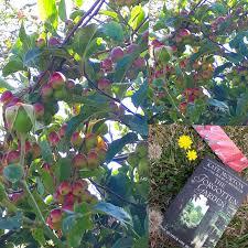 book review the forgotten garden kate morton
