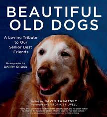 beautiful old dogs david tabatsky macmillan beautiful old dogs a loving tribute to our senior best friends