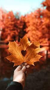 Autumn leaf Love heart 4K Wallpapers ...