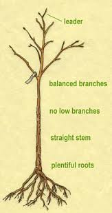 Best 25 Planting Fruit Trees Ideas On Pinterest  Buy Fruit Trees How To Graph A Fruit Tree