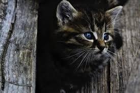 Fenstersturz Bei Der Katze Was Kann Ich Tun Veteria