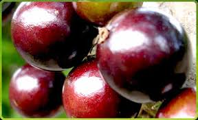 Rare Fruit Trees Thrive Amid California Drought  KPBSSouthern California Fruit Trees