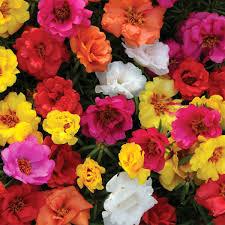 Imagini pentru flori de parc