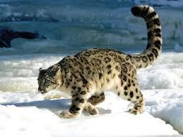 Животные Казахстана tr kz Основными задачами которых является сохранение живописного ландшафта в его естественном состоянии изучение растительного и животного мира