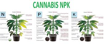 Cannabis Problem Chart Cannabis Npk Autoflower Seed Shop