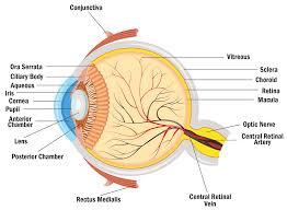 Faa Near Vision Acuity Chart About Ol Blue Eyes And Brown And Hazel Bca Content From