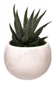Livetrends Design Group Livetrends Classic Magnet Pot White Design Plants