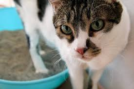toilet training your pets can be hard