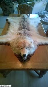 wolf skin rug northern wolf in great condition head to tail wolf skin rugs for
