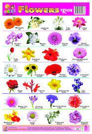 kids flower names flowers name in hindi