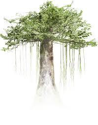 Tree ile ilgili görsel sonucu