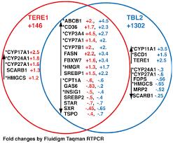 Compare Dna And Rna Venn Diagram Fission Fusion Venn Diagram Kadil Carpentersdaughter Co