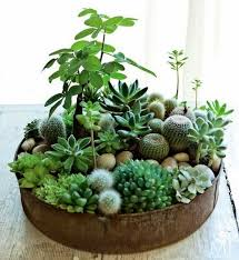 Summer plant Ideas: Succulent display