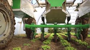dino the large scale vegetable weeding robot