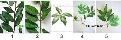 Collection Of Green Leaves Of Fruit And Berry Shrubs And Trees Fruit Tree Leaf Identification