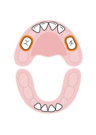 Baby Teething Timeline Baby Help Baby Teeth Order Molar