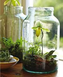 indoor gardening ideas. Mini-Indoor-Gardening-8 Indoor Gardening Ideas R