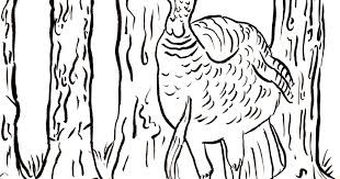 wild turkey coloring pages. Contemporary Pages Inside Wild Turkey Coloring Pages R