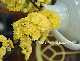 roses spring 2 jpg