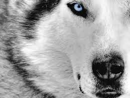 Awesome Dog Wallpapers - Top Free ...
