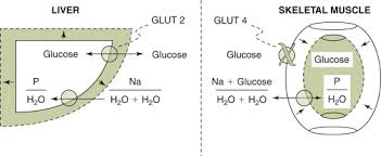 Hyperglycemia An Overview Sciencedirect Topics