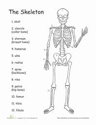 Small Picture Awesome Anatomy Bones to Pick Worksheet Educationcom