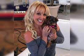 Britney Spears' dogs returned after ...