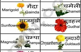 Flower Chart In English Flowers Name English Meaning Image Flowers Vocabulary