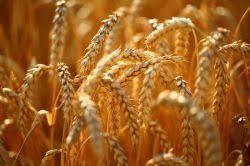 Изучение действия удобрений виды и дозы на урожайность и  Курсовая работа