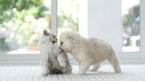 puppy and kitten fighting. Fine And Adorable Kitten And Puppy Fighting Together Slow Motion Stock Video Footage   Videoblocks To U