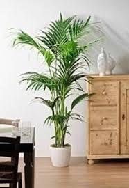 Appartiene alla famiglia delle araceae, ed è diffusa soprattutto come pianta d'appartamento. Risultati Immagini Per Piante Da Appartamento Resistenti Piante Da Appartamento Appartamento Piante