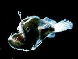 Интересные факты о рыбах Интересные факты из жизни глубоководные рыбы